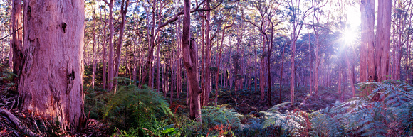 Boranup Forest Sunshine