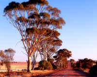 Old Farm Road, Cunderdin